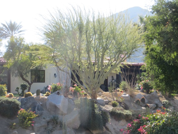 Backyard Aboretum